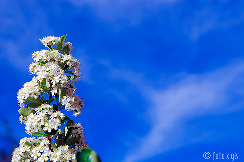 Flor y cielo (background) | by glspro