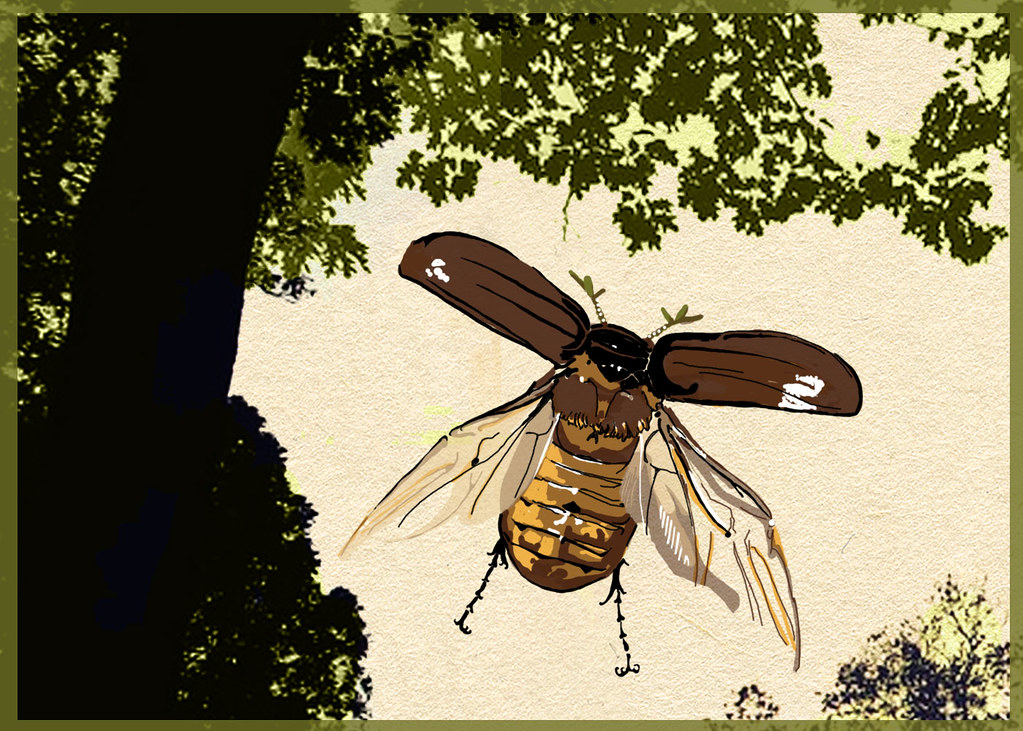 June Bug Drawing June Bug Idea 5x7