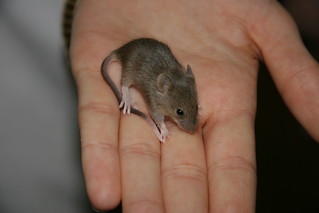 Mouse in the Hand | by HerPhotographer