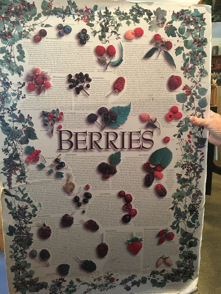 WV fruit & berry