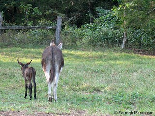 The Daily Donkey 109 | by Farmgirl Susan