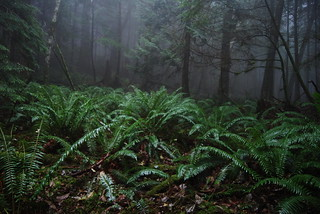 The Gully of Ferns | by Mark Griffith