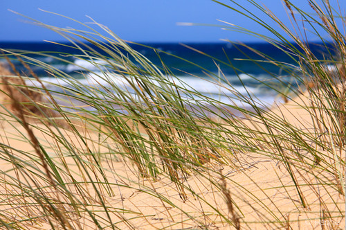 Side Swept Beach Grass | by raphie
