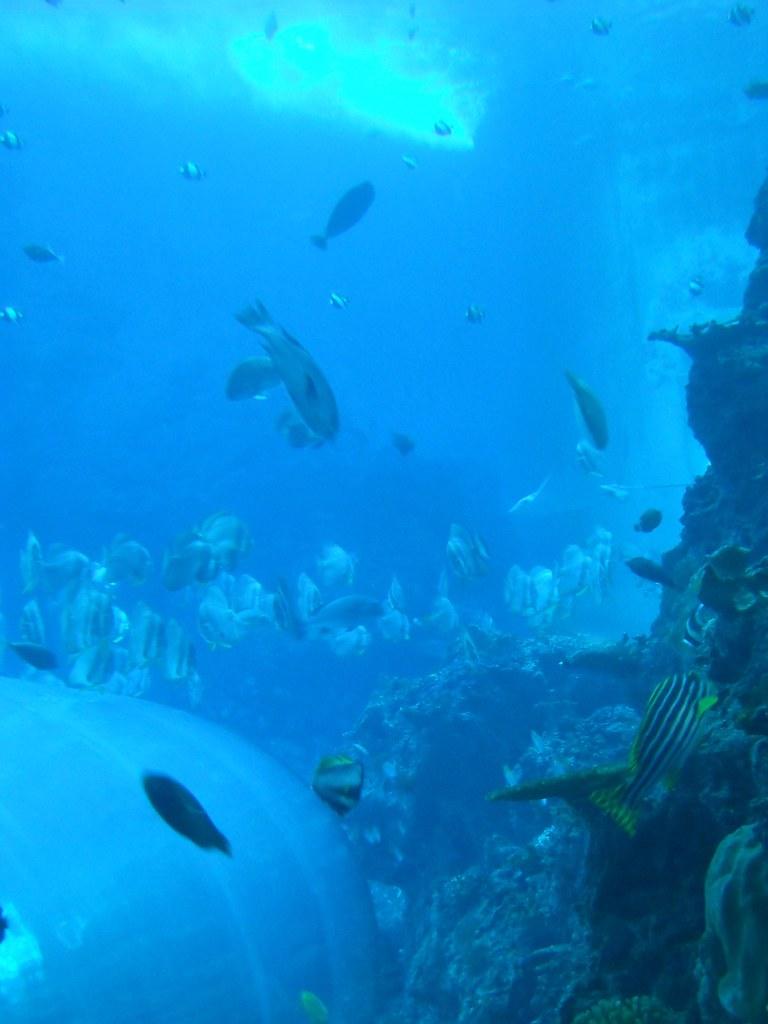 National Museum of Marine Biology and Aquarium - 40 Flickr