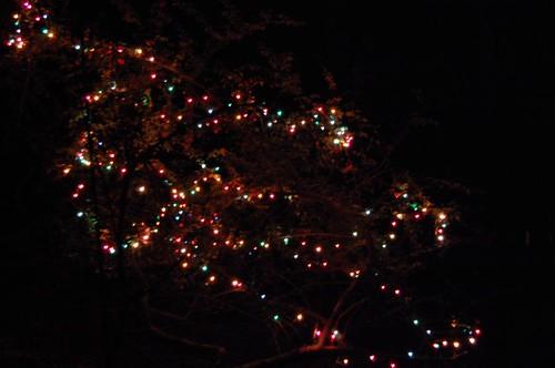 Exterior Christmas Tree Light Installation In Newport Beach Ca
