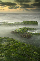 Seagrass | by Will Shieh