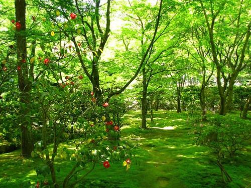 Manuel du jardin vert