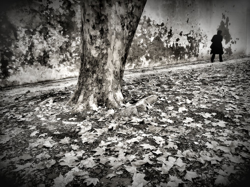 Leaving the leaves | by Rui Palha