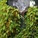 feathery moss