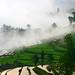 2008 Yunnan Revisit