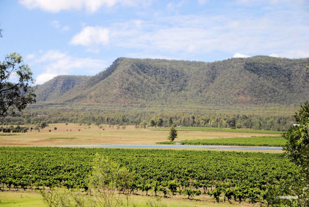 Peltomaisema Hunter Valleyssä Australiassa