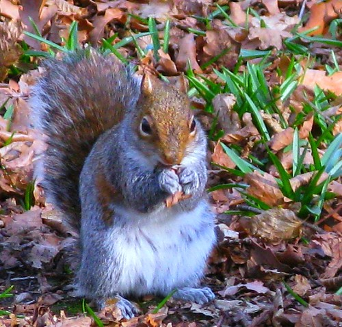 Meet Victor Squirrel - The Copse Champ! | by ☜✿☞ Bo ☜✿☞