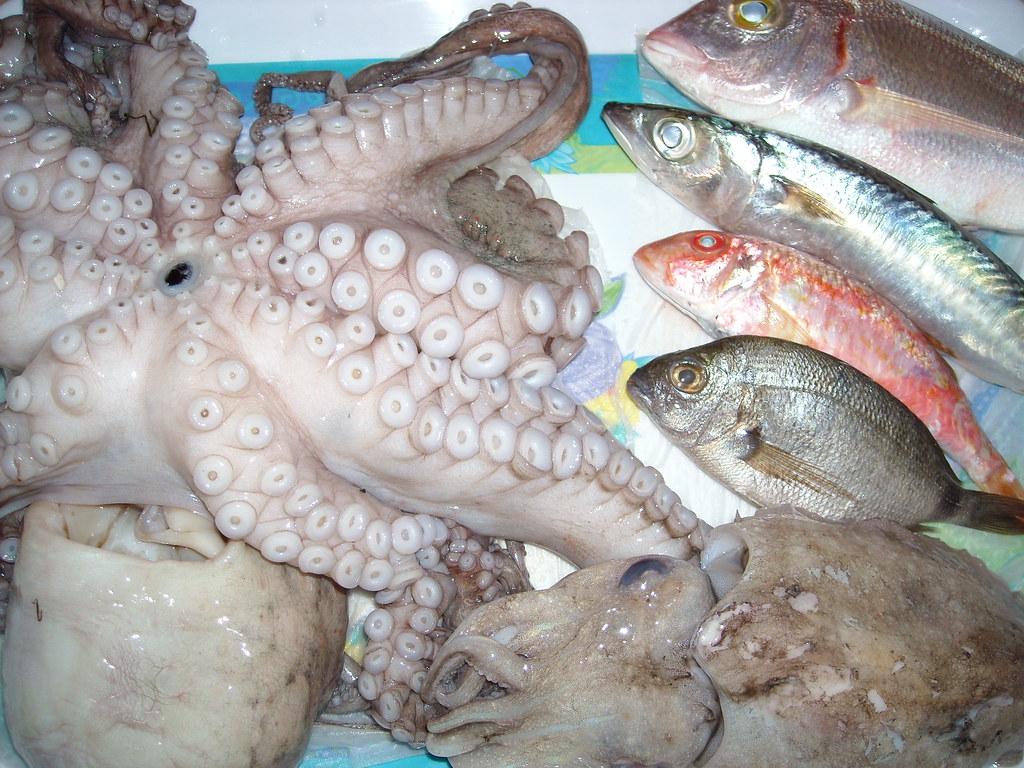 Fish | Poissons de Tunisie: Poulpe, maquereaux, rouget, page… | Flickr