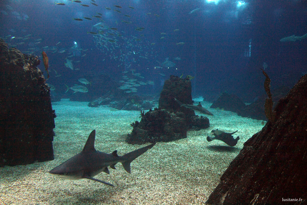 C'est dommage, on a pas vu les requins manger de petits poissons…