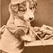 Puppy - I Want Customers - old pc - AJB No 73