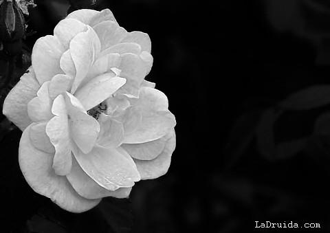 Blanco y negros - 1 part 7