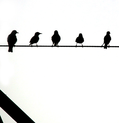 Birds on Wire | I caught these birds on a wire in western ...