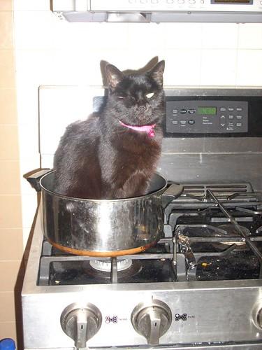 Free Cat Food Samples Canada
