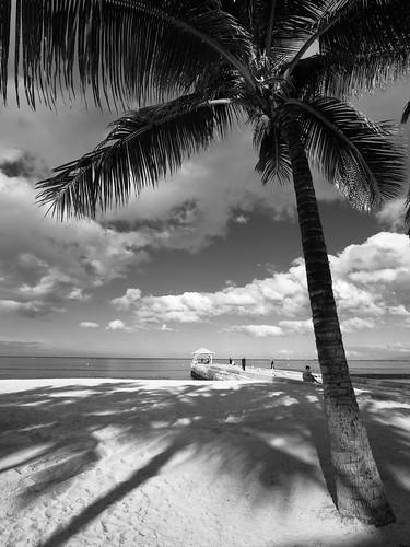 Palm Beach Gardens FL Luxury Apartments | The Hamptons