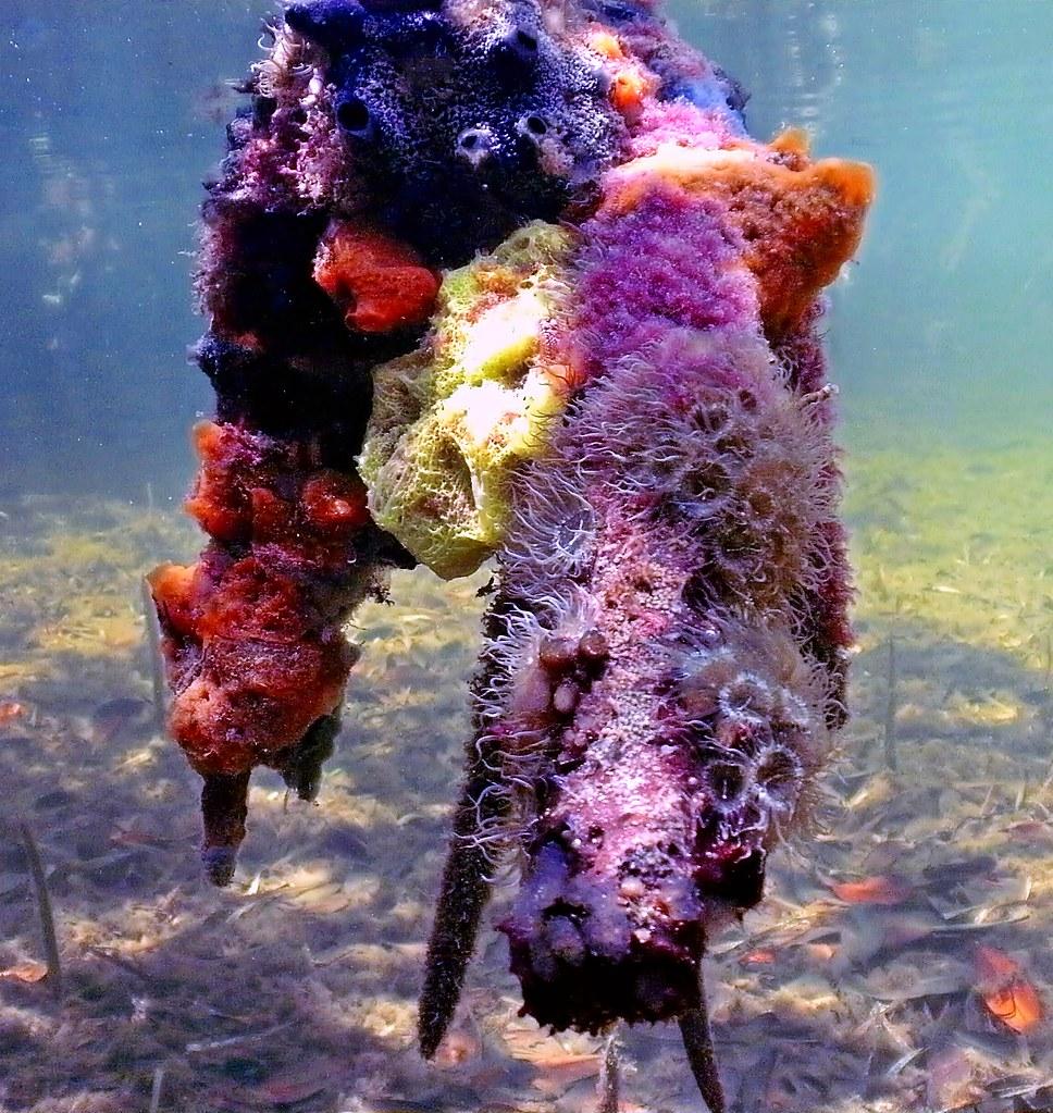 John Pennekamp Coral Reef State Park, Key Largo Florida