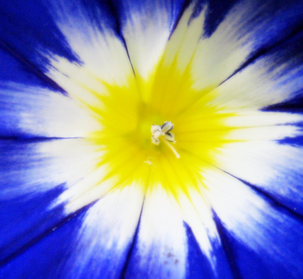 Tye Dye Flower Stephanie Simpson Flickr
