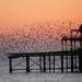 West Pier Starlings (Brighton)
