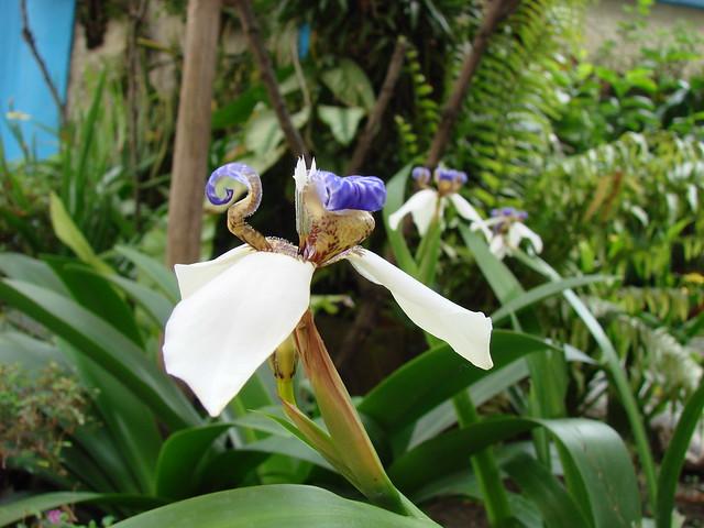 Las flores del jardín de mi esposa [Flowers of my wifes garden]