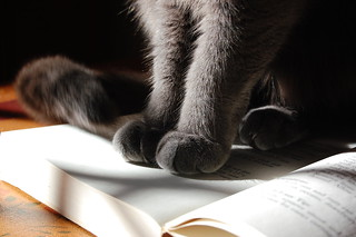 Cat on Cookbook | by mostlysunny1