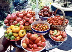 Tomatoes, summer 2001 | by Green Kitchen