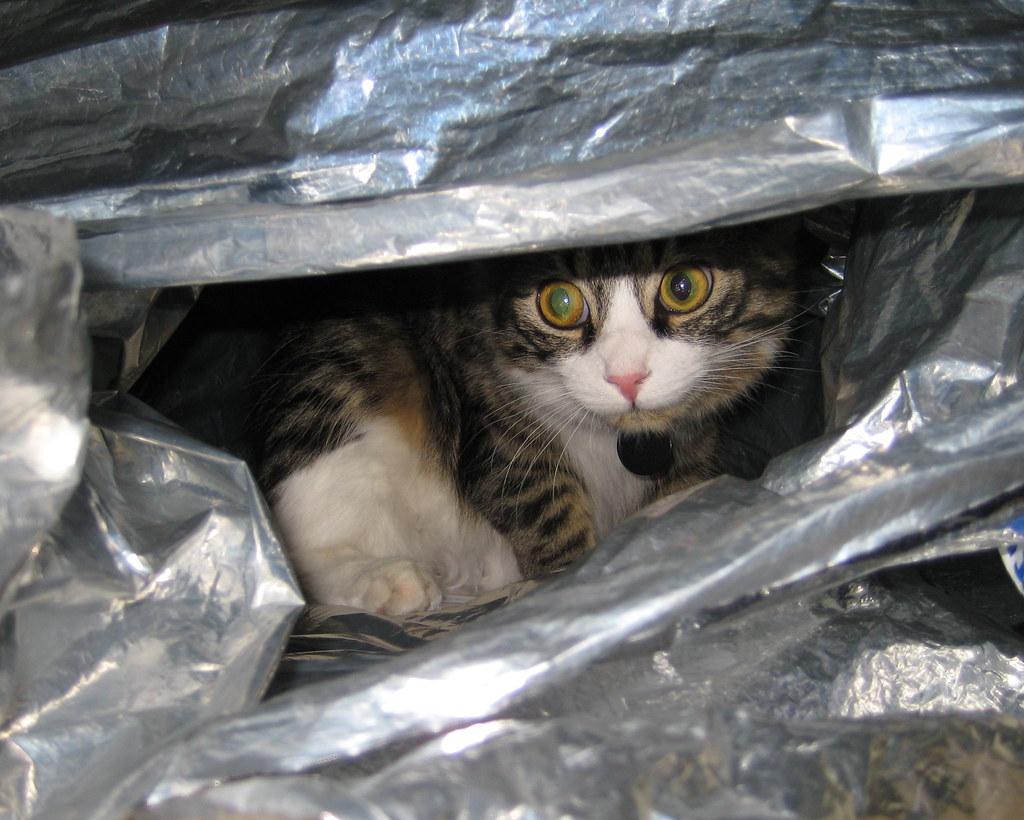 Cat In A Mylar Blanket Cat In A Mylar Blanket Flickr