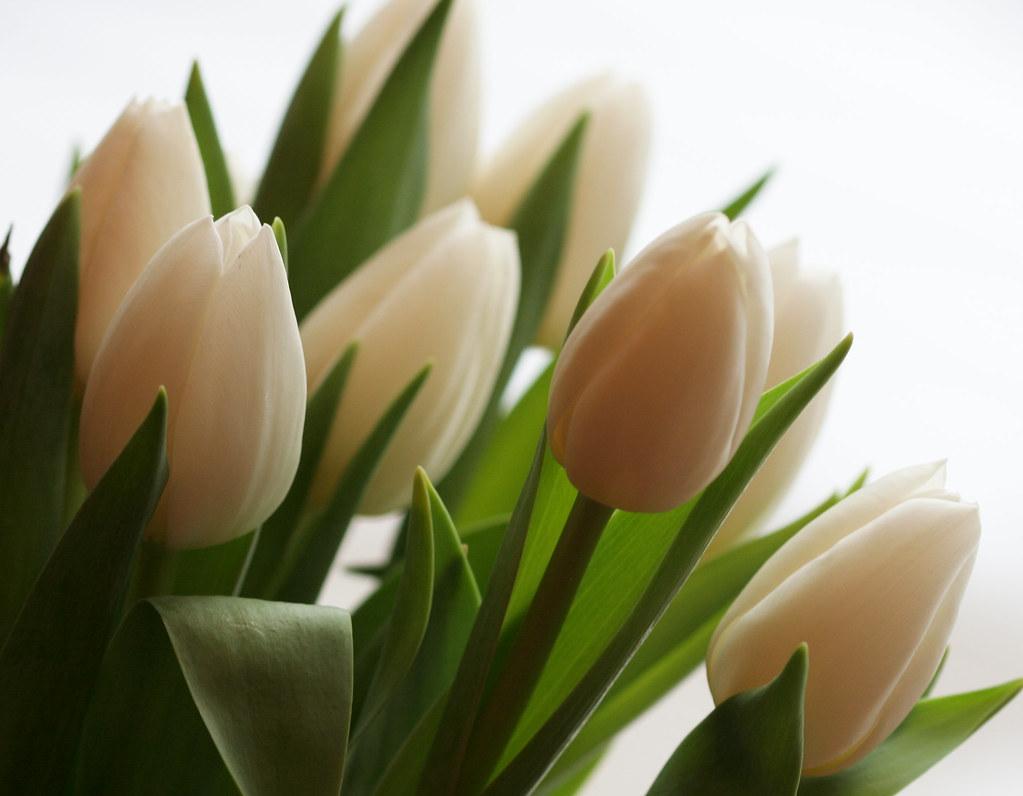 White Cake With Fresh Flowers Birthday