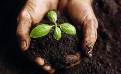 Soil in Hand | by visionshare