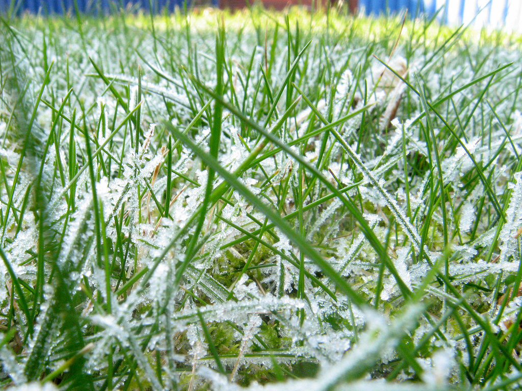 Frosty grass | If Honey I shrunk the kids! had been set in ...