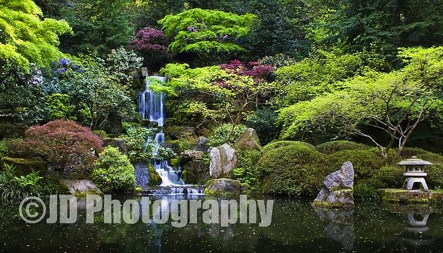 Japanese Garden Pond Portland Oregon The Japanese Gard Flickr