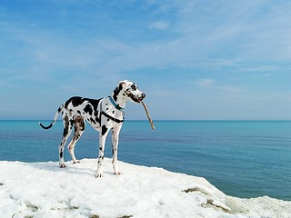 Canadian Dane at Lake Ontario, Toronto | by Kyra Savolainen