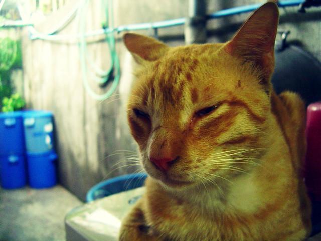 Cat Barely Eating Drinking Lethargic