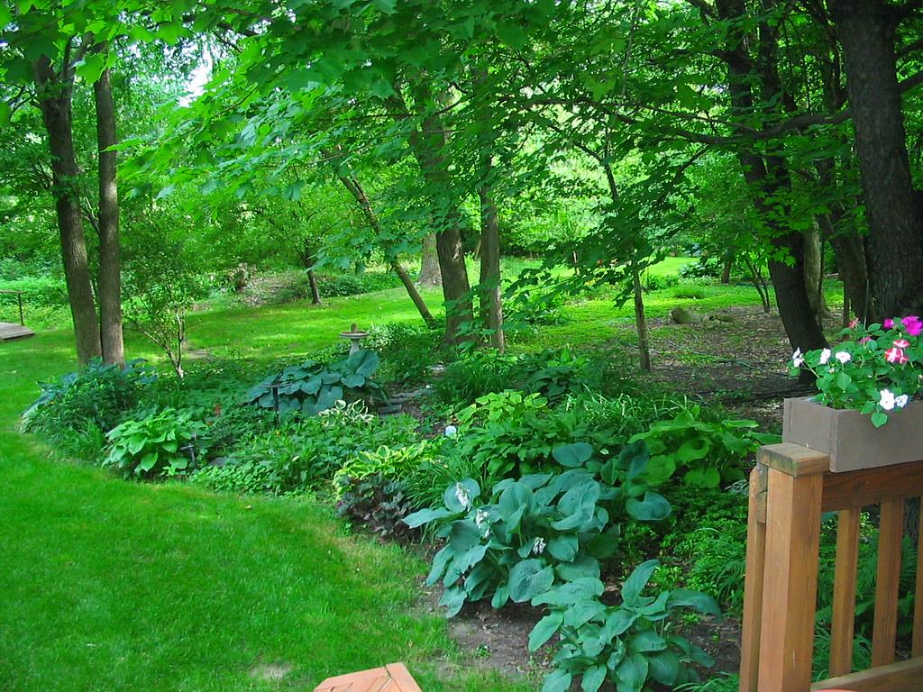 Shade garden with giant hostas   Shade garden under trees ...