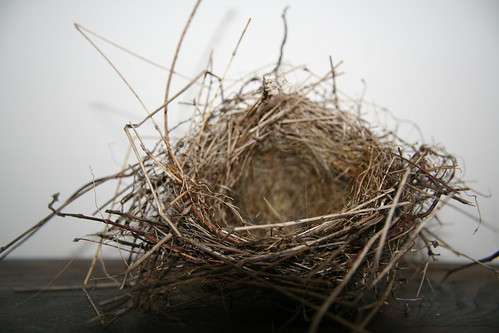 nest | by savvy.librarian