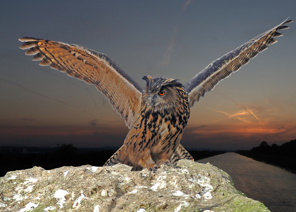 european eagle owl with wings spread   the eurasian eagle-ow…   flickr