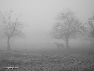 Horse In The Fog | by GeorgeAlger.com