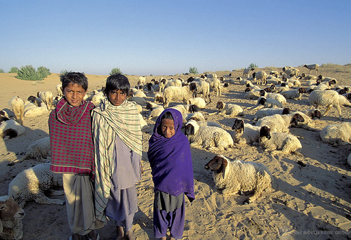 Portrait. Children with livestock. India | by World Bank Photo Collection