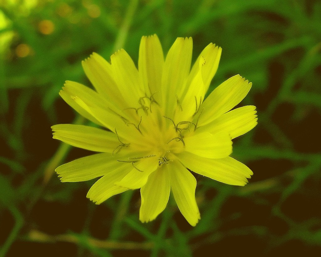 Meaning Of Yellow The Color Yellow Has Been Closely Associ Flickr