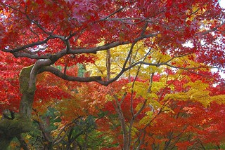 Fall in Tofukuji | by _Maji_