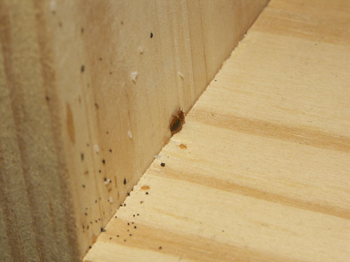 Bed Bug Nymphs Eggs Feces On Wood Cd Shelf With Some