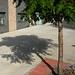 Sidewalk tree