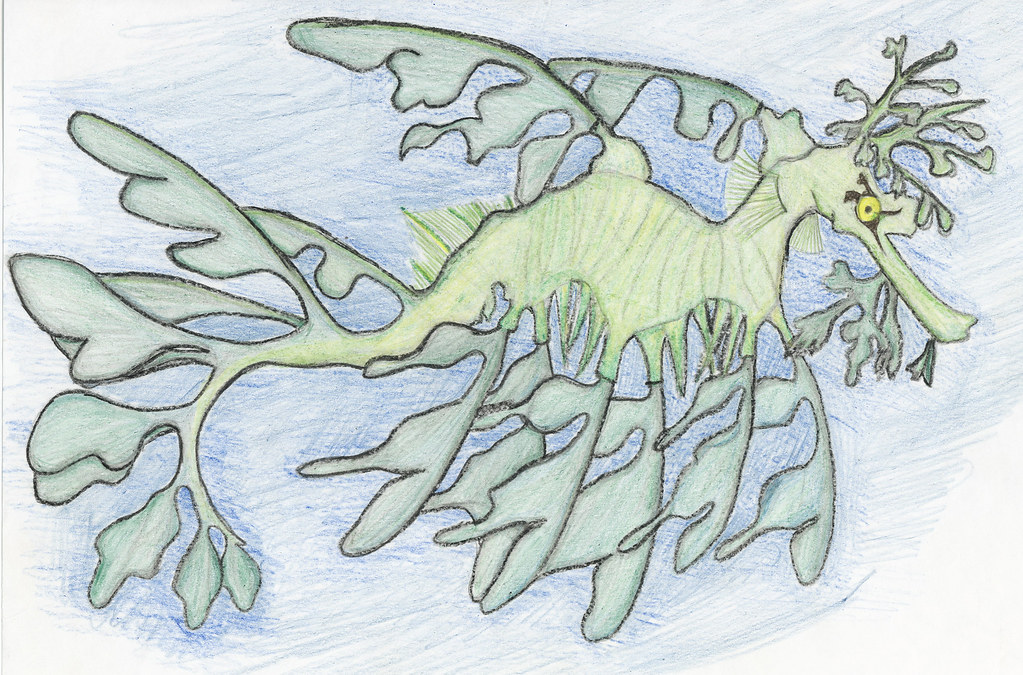 Leafy Sea Dragon | Drawing for a marine biology class ...