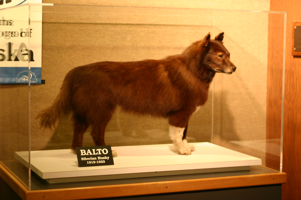 balto the wonder dog as in the disney movie quotbalto