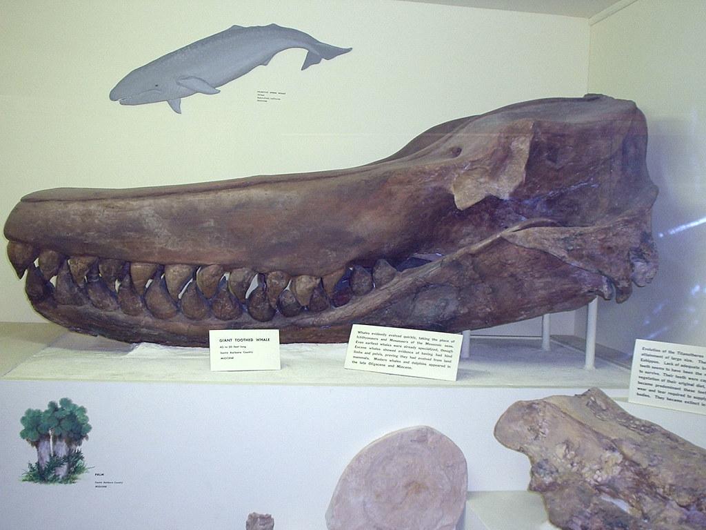 Santa Barbara Museum Of Natural History Jobs