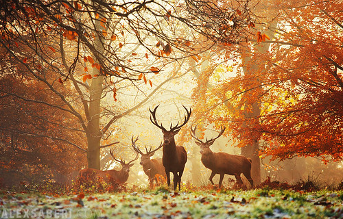 Realm of the Deer | by alex saberi