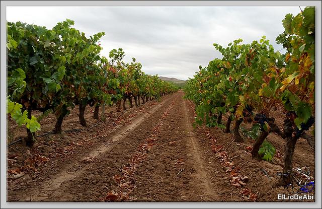 Uvas y Vino haciendo turismo del Vino 3